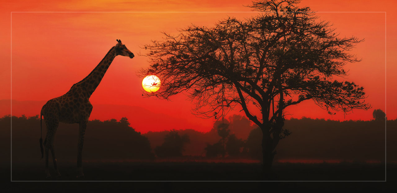 43-Tanzania-prosperity-africa-penresa