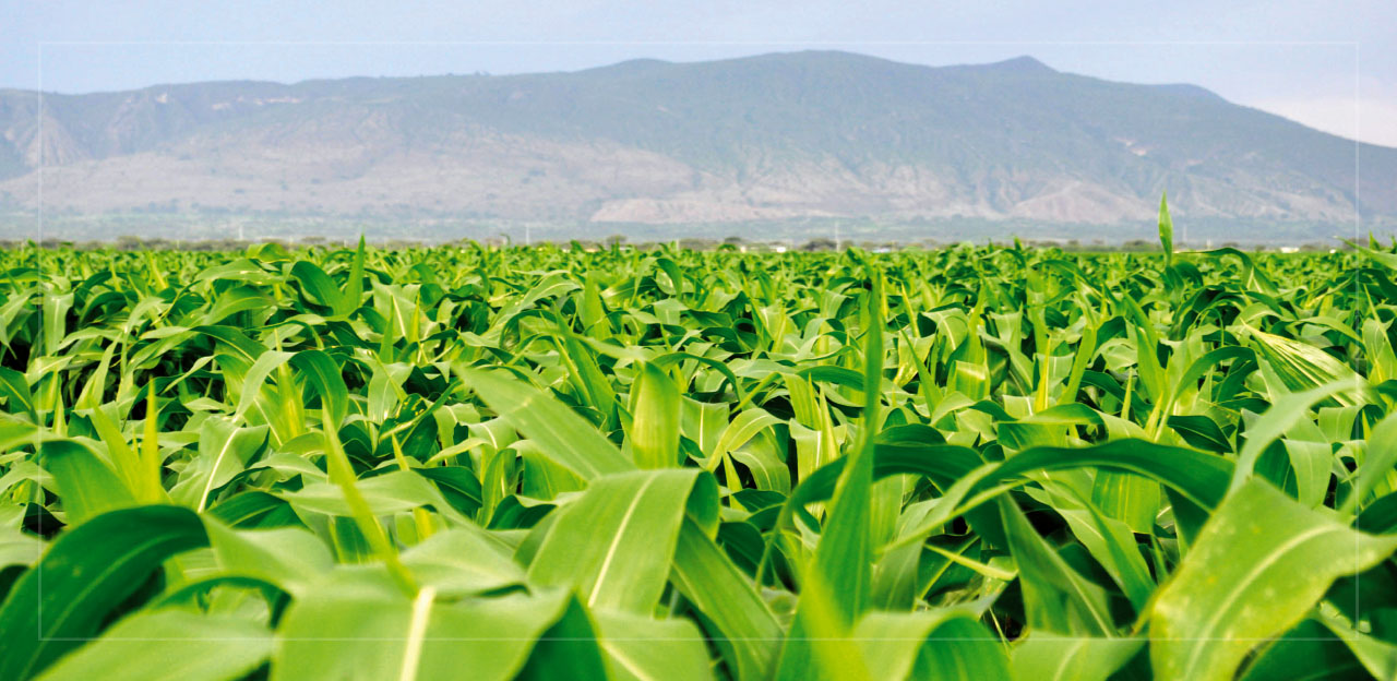 51-ethiopia-agriculture-farm-water-penresa